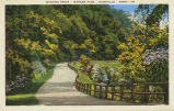 Winding drive, Warner Park, Nashville, Tenn., between 1907 and 1914