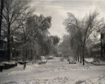 Photograph of Nashville ice storm, 1951 February 2