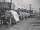 Ringling-Barnum elephants walking out Charlotte Avenue to Centennial Park from the north end of...