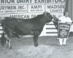 Grand Champion Brown Swiss Bull at the Tennessee State Fair, Nashville, Tennessee, 1971 September