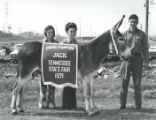 Grand Champion Jack at the Tennessee State Fair, Nashville, Tennessee, 1971 September