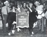 Champion Bull at the Tennessee State Fair, Nashville, Tennessee, 1971 September