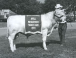 Grand Champion Bull at the Tennessee State Fair, Nashville, Tennessee, 1971 September