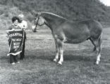 Champion Horse Mule at the Tennessee State Fair, Nashville, Tennessee, 1971 September