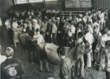 Dairy cattle exhibitors at the Tennessee State Fair, Nashville, Tennessee, 1974 September 20