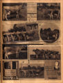 Photomontage of cows at the Tennessee State Fair and two ads. Nashville Banner, 1931 September 20.